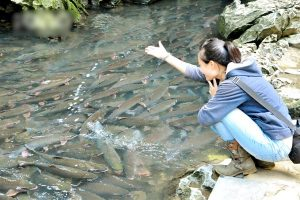 Tour du lịch HN – Suối Cá Thần Cẩm Lương – Biển Hải Tiến – HN