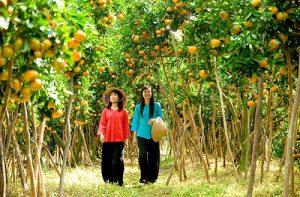 Tour Bến Tre- Cần Thơ- Bạc Liêu- Cà Mau- Phú Quốc 07 ngày 06 đêm Giá Rẻ 100%