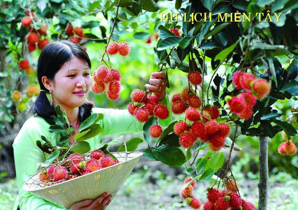 Tour Sài Gòn- Miền Tây Sông Nước Cần Thơ Giá Ưu Đãi Nhất