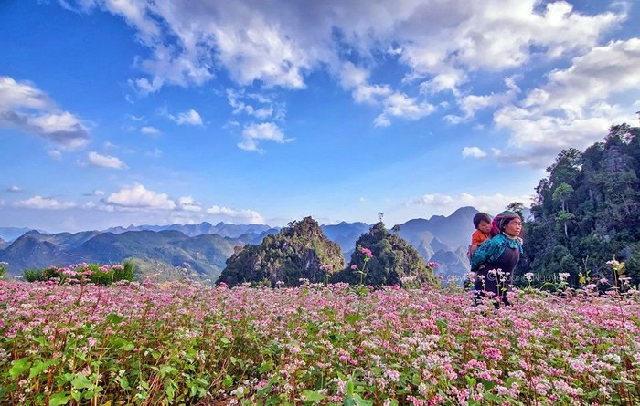 Tour du lịch Hà Nội – Hà Giang 3 Ngày 2 Đêm Giảm Giá !